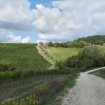 Escursione mountain bike Chianti