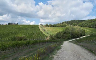 Escursione in mountain bike sulle colline del Chianti