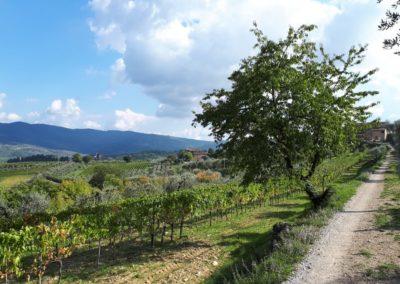 escursione-mountain-bike-chianti-6